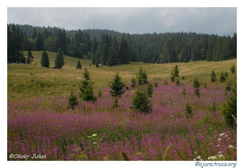 Quelques photos d'Olivier J. paysages et animaux jurassiens 20090807223328-895208a4