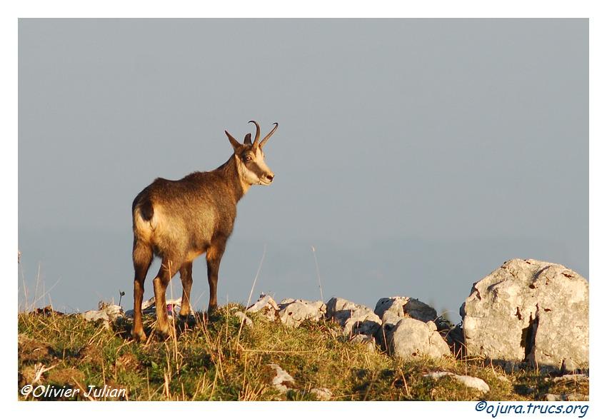 Quelques photos d'Olivier J. paysages et animaux jurassiens 20111018142008-0376ce04