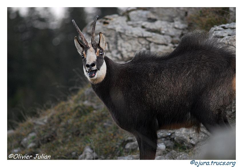 Quelques photos d'Olivier J. paysages et animaux jurassiens 20111018142018-3246c005