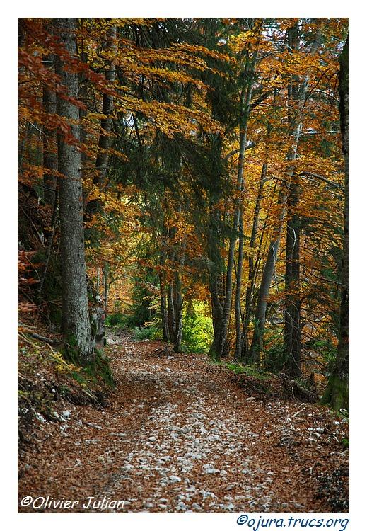 Quelques couleurs d'automne 20111103095000-65aaeef9