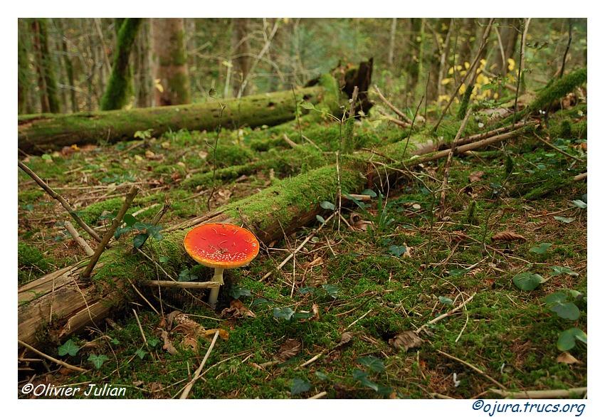 Quelques couleurs d'automne 20111103205014-9ea16d8e