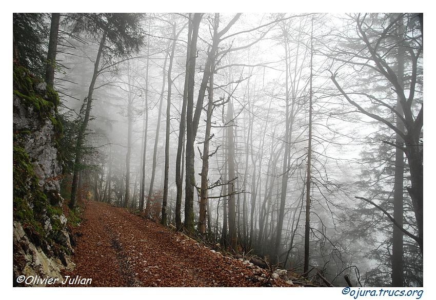 Quelques couleurs d'automne 20111106171439-985678df