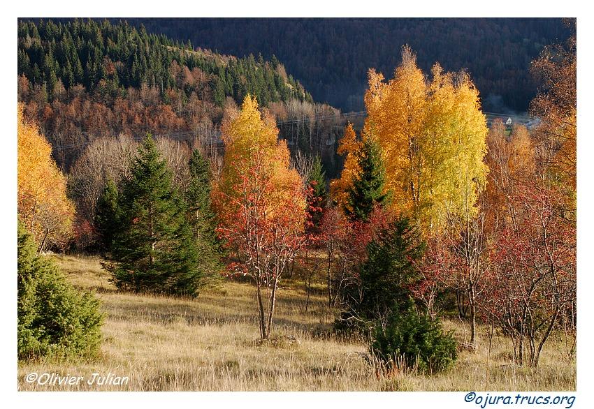 Quelques couleurs d'automne 20111110191238-fe05ac83