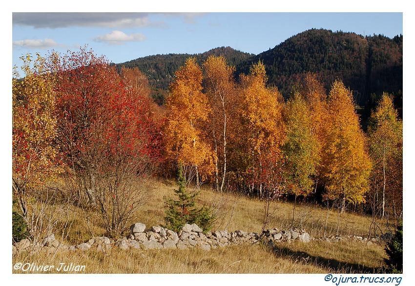 Quelques couleurs d'automne 20111110191245-2e95f900