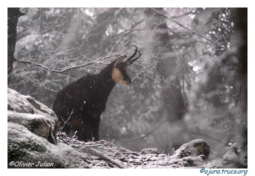 Quelques animaux vus cet hiver 20120124202818-2b6602d2