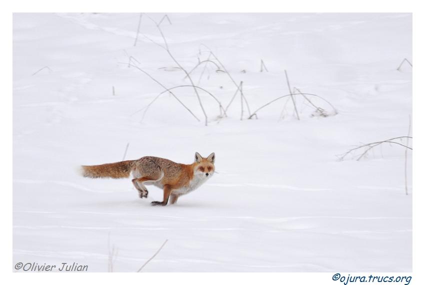 Quelques animaux vus cet hiver 20120214200213-e9962037