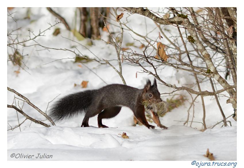 Quelques photos animalières.. 20131127194616-c16a1c03