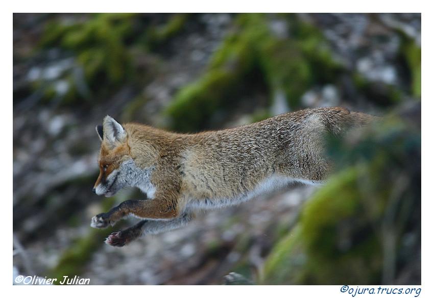 Quelques photos animalières.. 20140218102634-06e57aa5
