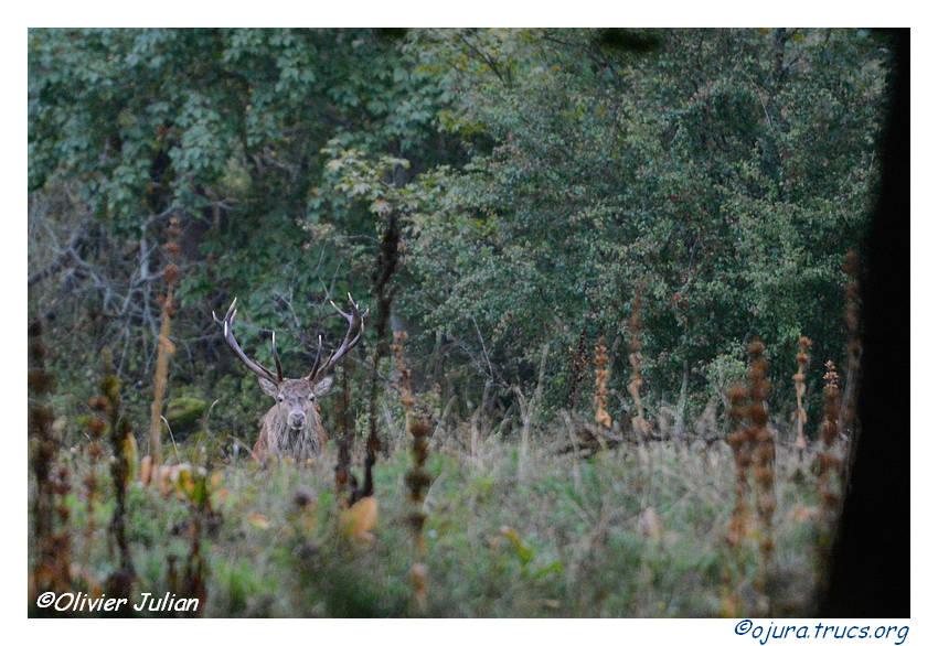 Nouvelles photos animalières 20140917175954-4567a538
