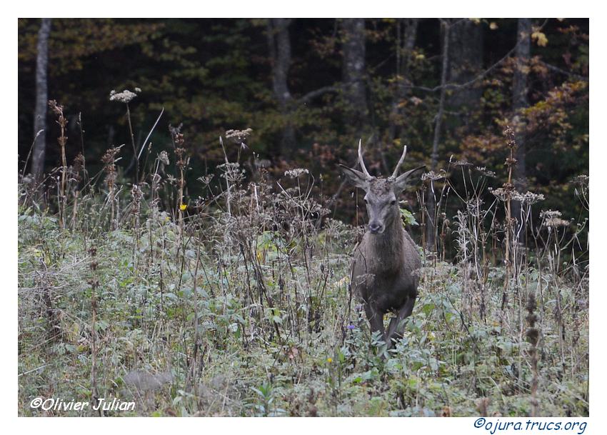 Nouvelles photos animalières 20141002171804-c803699a