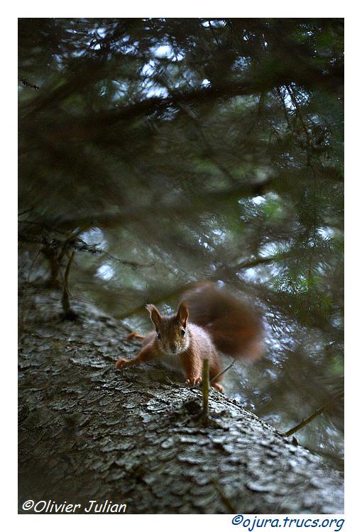 Nouvelles photos animalières 20141028204553-a12beaa4