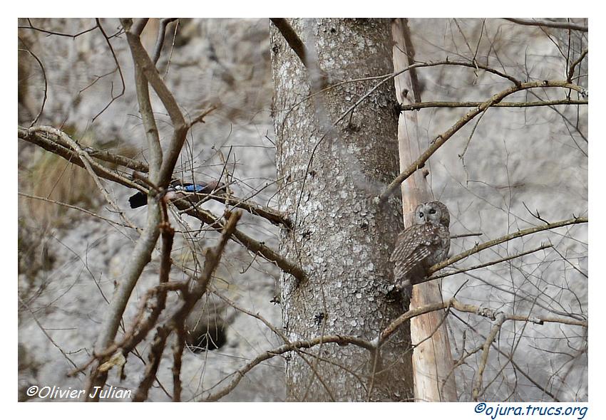 Nouvelles photos animalières 20150325142935-c7d6a549