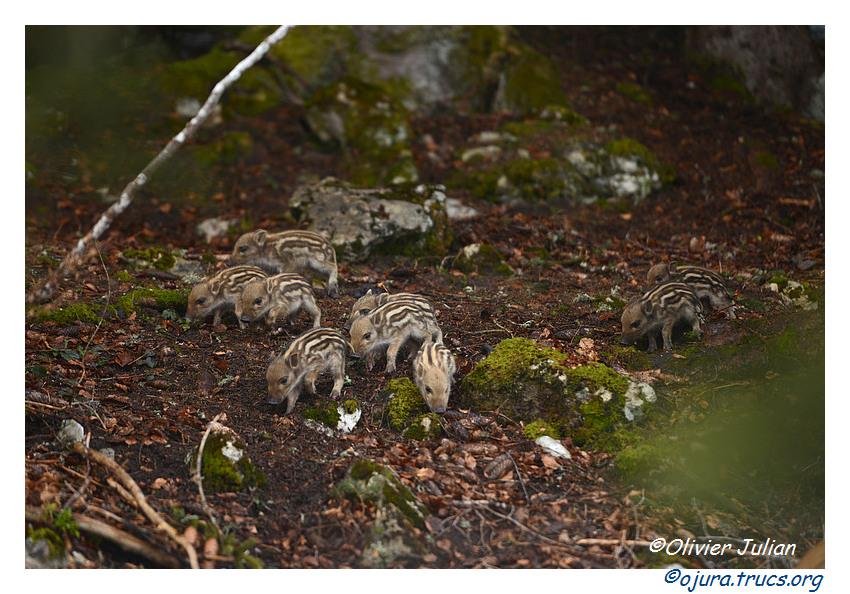 Nouvelles photos animalières 20150330141246-79104158